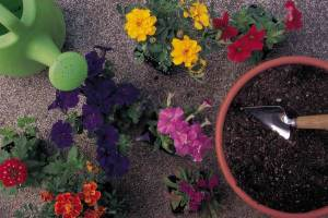 Container Gardening - Designing and Displaying Potted Gardens