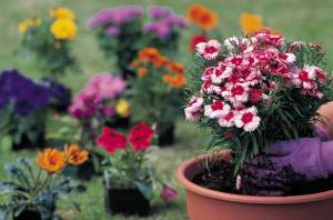 Choosing Plants for Container Gardens