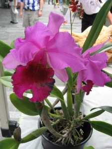 Cotters Market _Orchid_Flinders St Townsville 25 March 2012