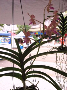Cotters Mrkt Orchids Flnders St Townsville_25 March 2012
